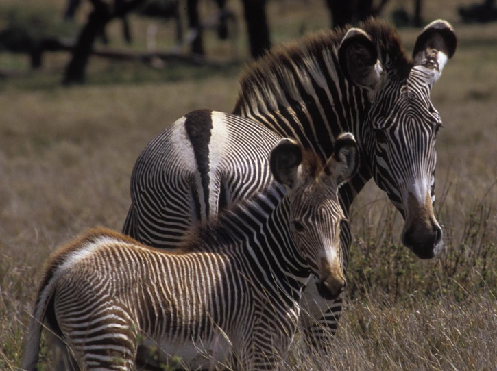 Zebra dating site